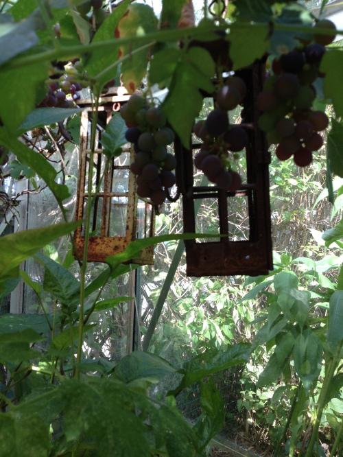 laterns in greenhouse garden
